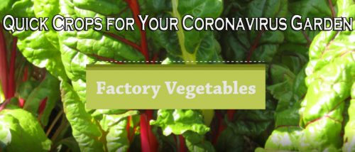 Read more about the article YouTube – Quick Crops for a Coronavirus Garden