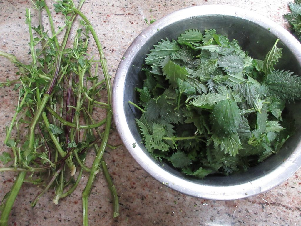 Stinging Nettles and stems