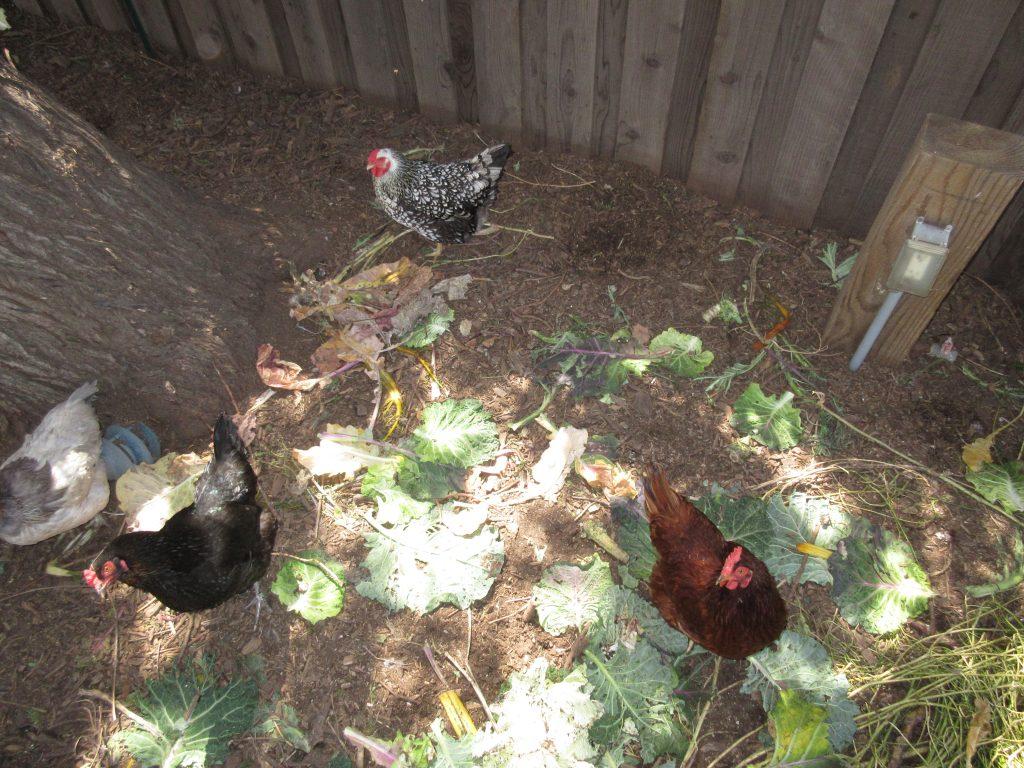 Hens in heaven