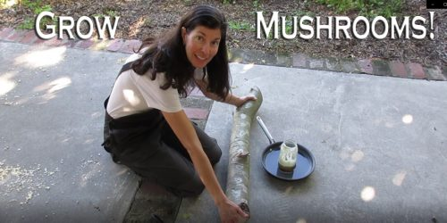 Read more about the article YouTube: Inoculating Mushroom Logs – Starter Guide
