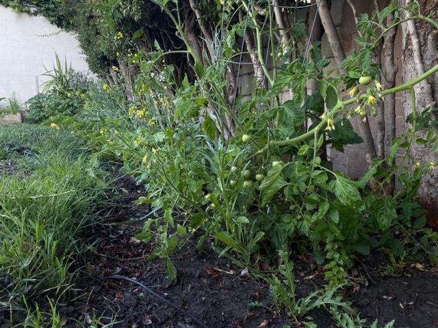 Guy Frenkel's Garden