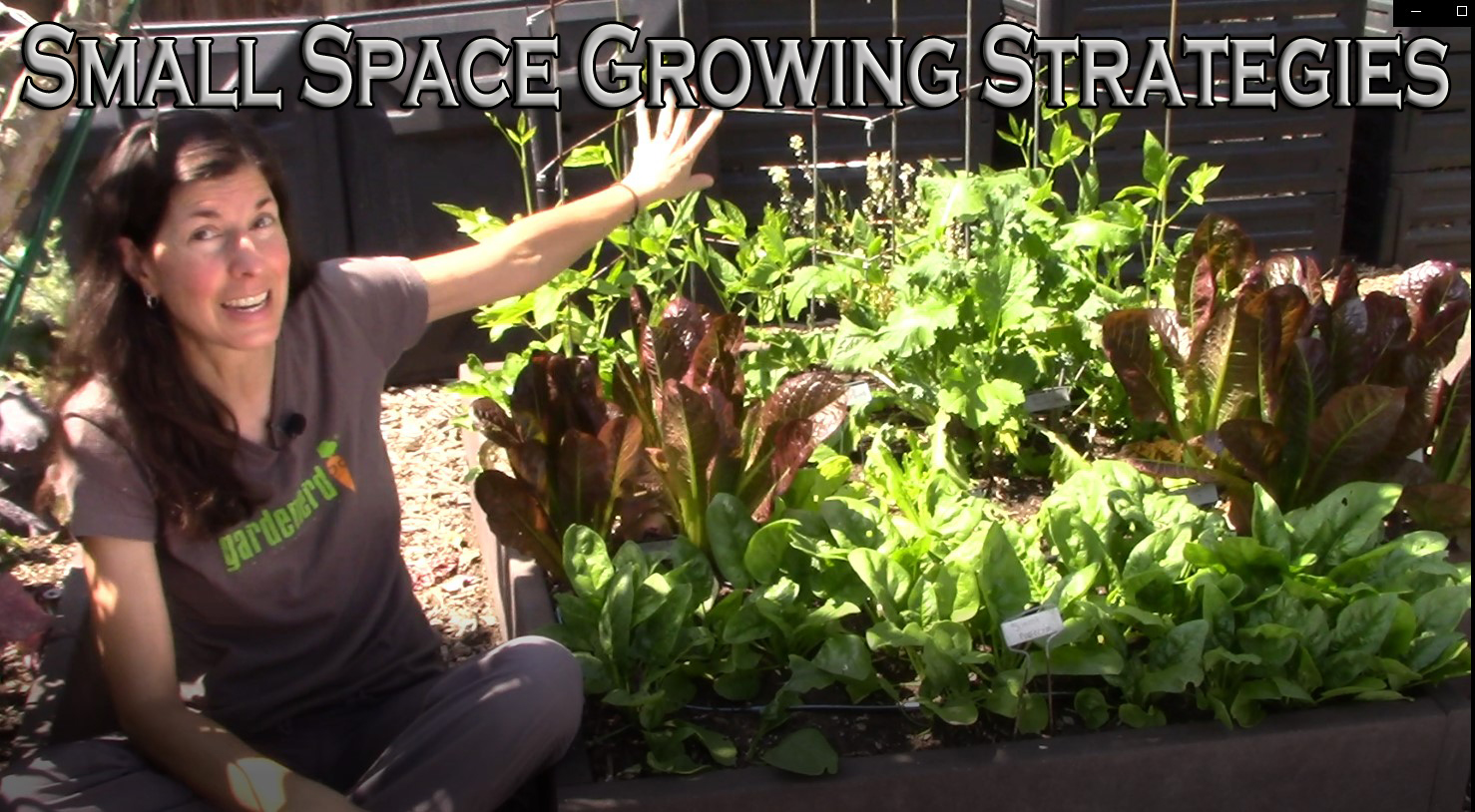 Read more about the article YouTube: Small-Space Gardening Strategies