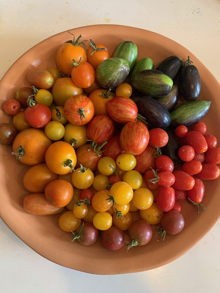 Scotts tomatoes