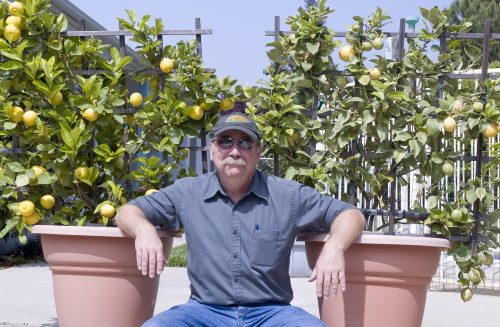 Read more about the article Podcast: Fruit Trees with Tom Spellman