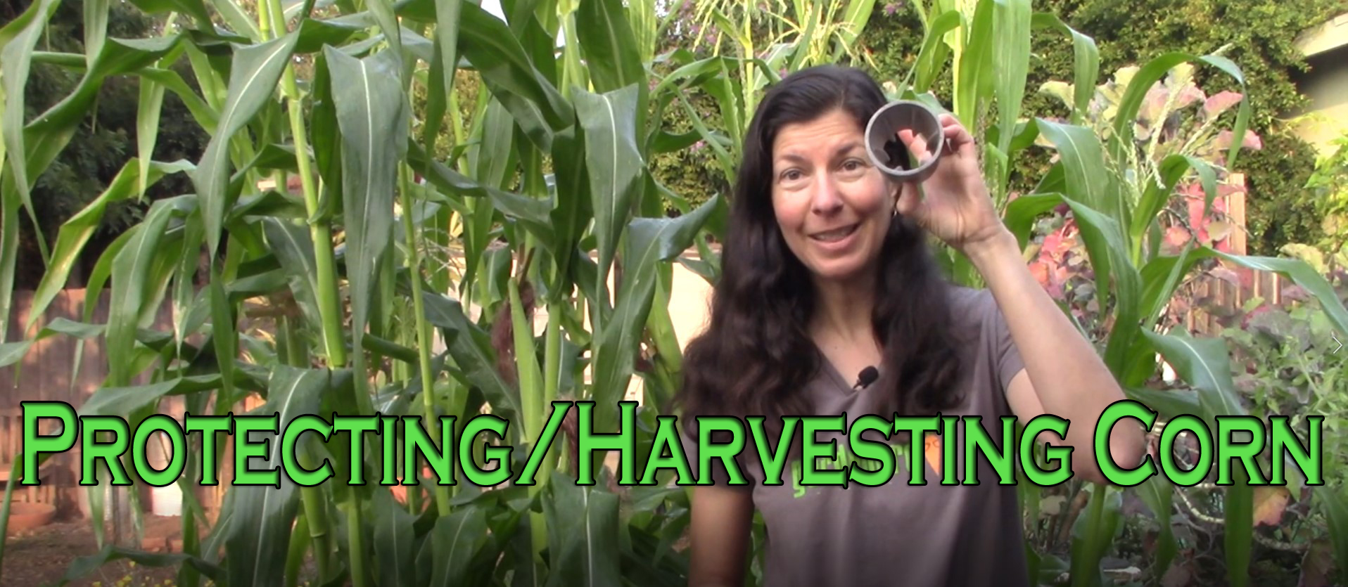 You are currently viewing YouTube: Protecting and Harvesting Corn