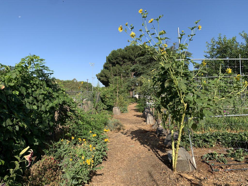 The farm at Sarvodaya Institute
