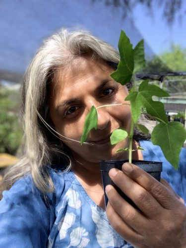 Read more about the article Podcast: Tropical Fruits with Manju Kumar