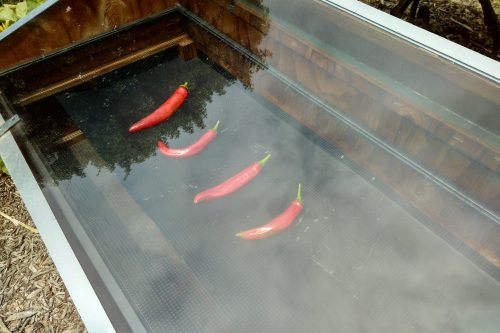 Read more about the article Preserving: Drying Peppers to Make the Harvest Last