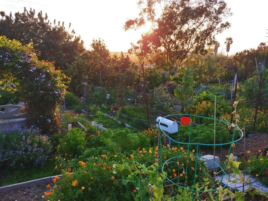 Natalie's garden