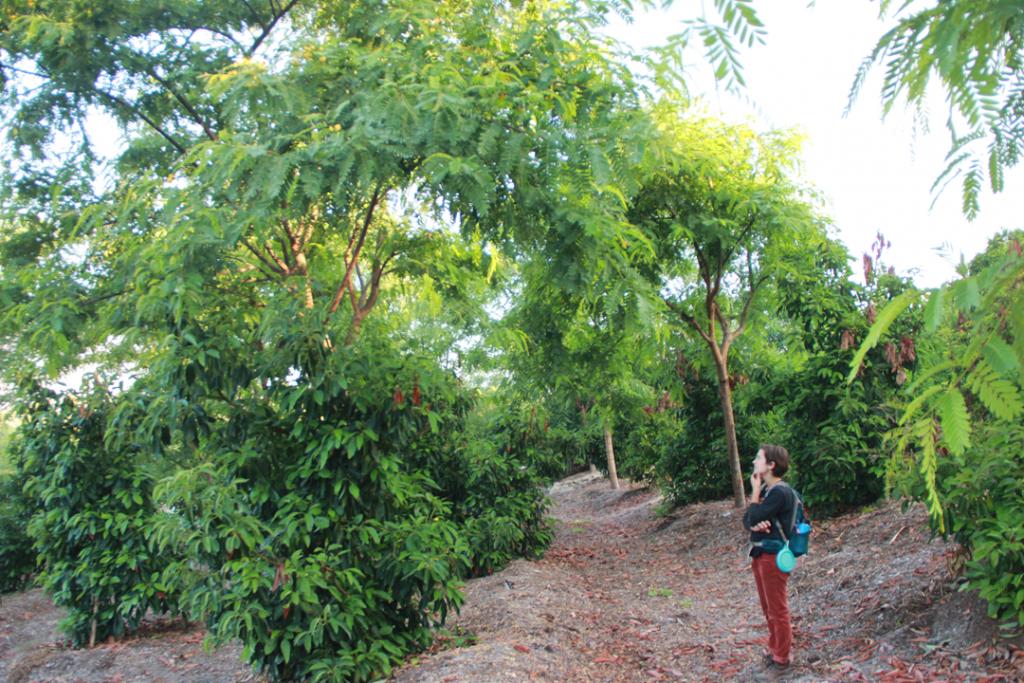 Nitrogen Fixing Trees