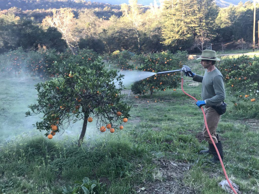 David spraying compost tea