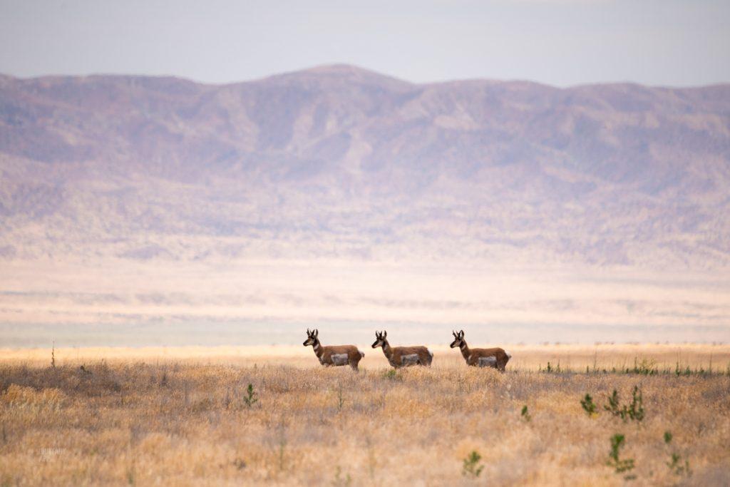 Carrizo Plains wildlife