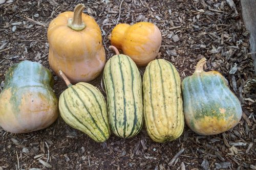 Read more about the article Wordless Wednesday: Fall Harvests and New Beginnings