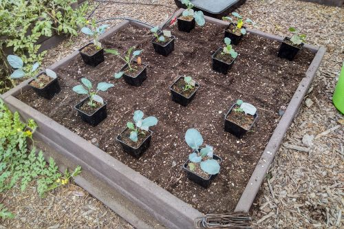 Read more about the article Wordless Wednesday: Fall Gardening is ON!