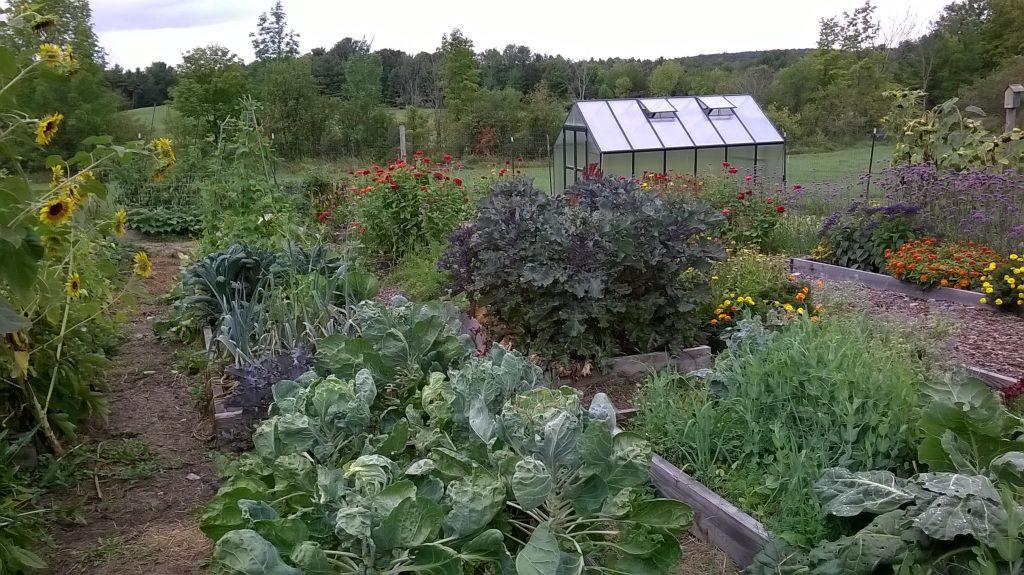 Charlies garden