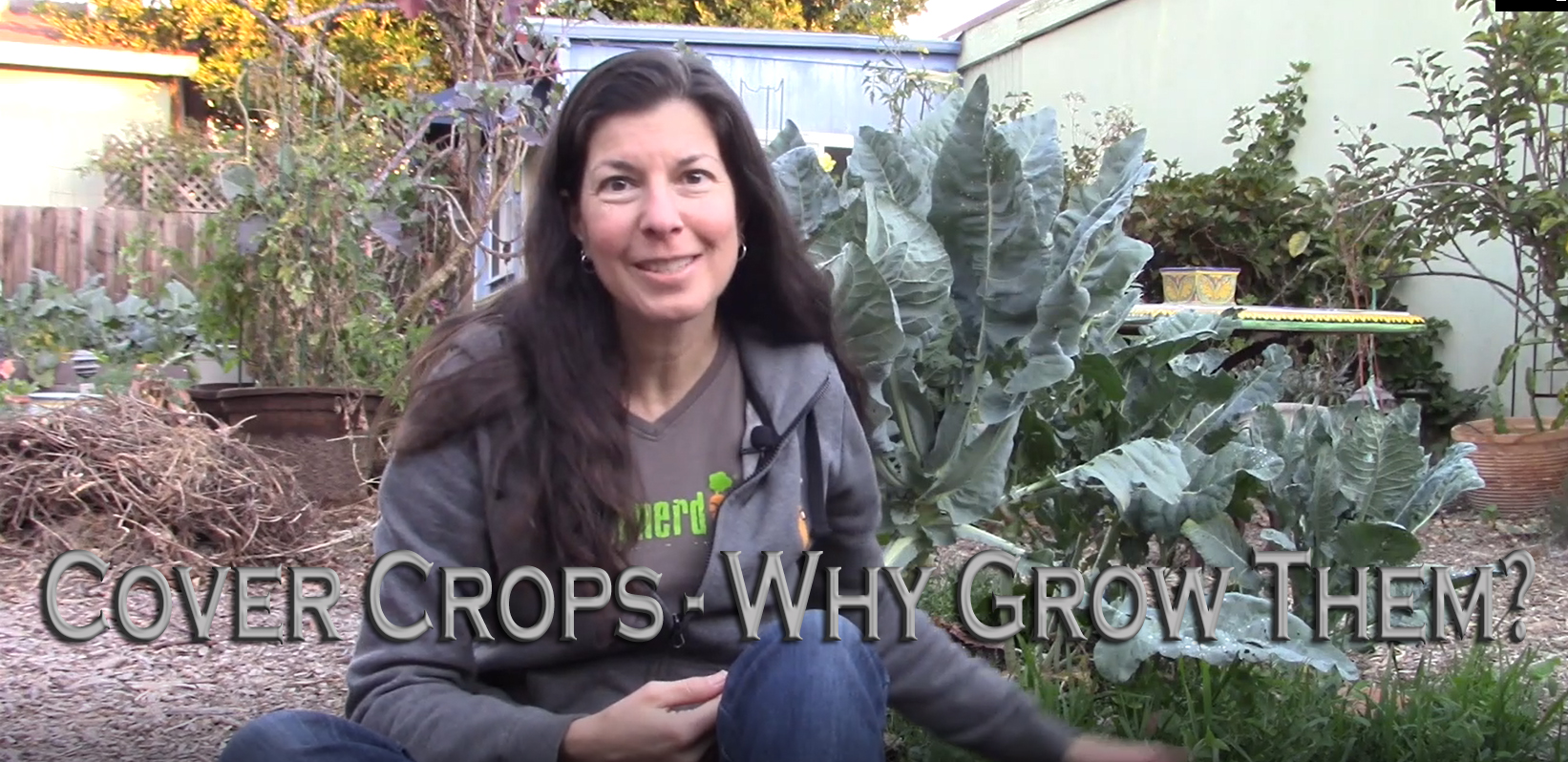 Read more about the article YouTube: Cover Crops – Why Grow Them?