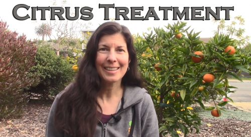 Read more about the article YouTube: How to Fix Most Citrus Tree Problems