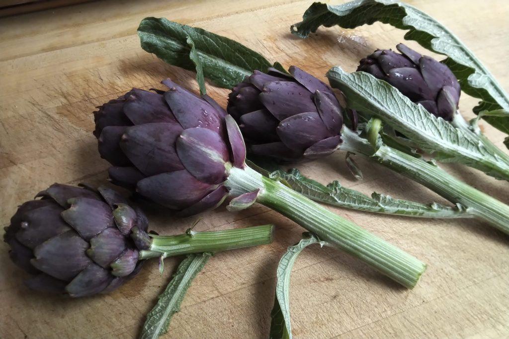 purple artichoke harvest