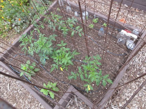 Read more about the article Wordless Wednesday: National Gardening Day