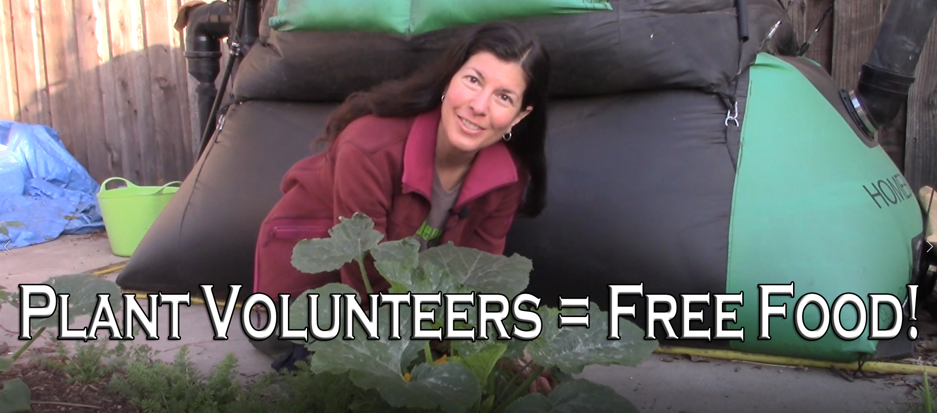 Read more about the article YouTube: Volunteers – The Benefit of Free Plants Forever