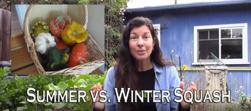 Read more about the article YouTube: Summer Squash Vs. Winter Squash