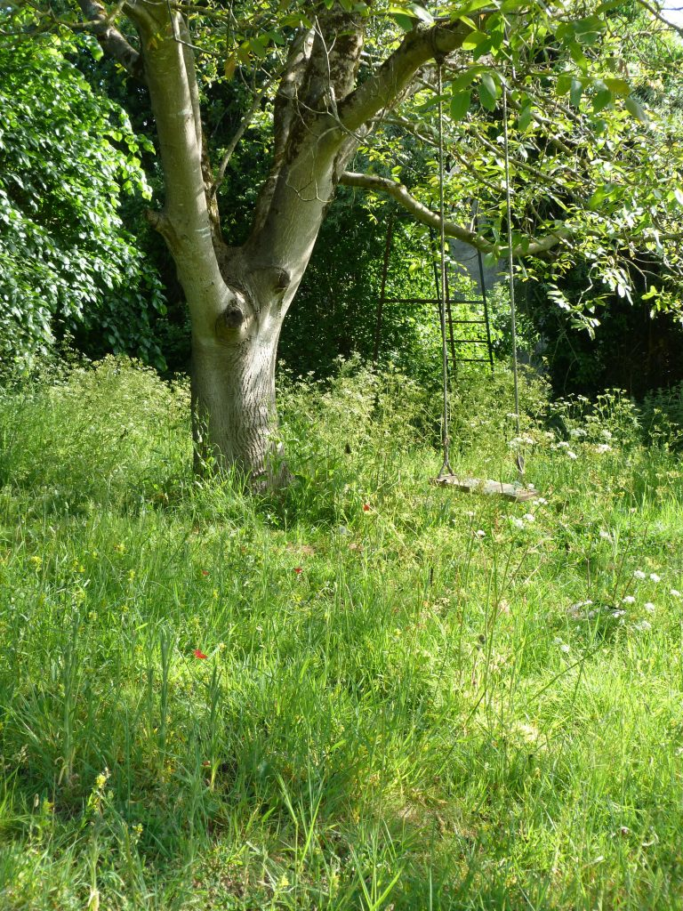 Matt Rees-Warren garden