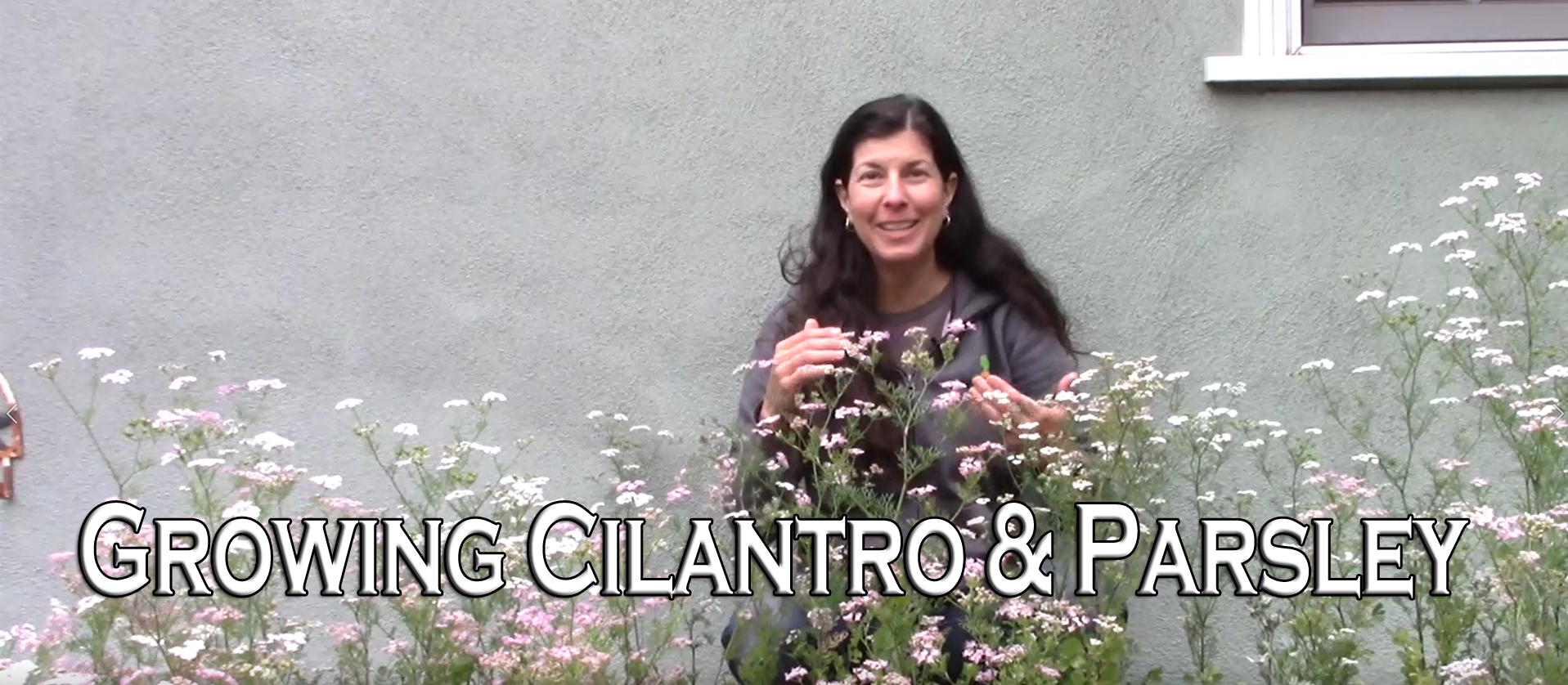 Read more about the article YouTube: Growing Cilantro and Parsley