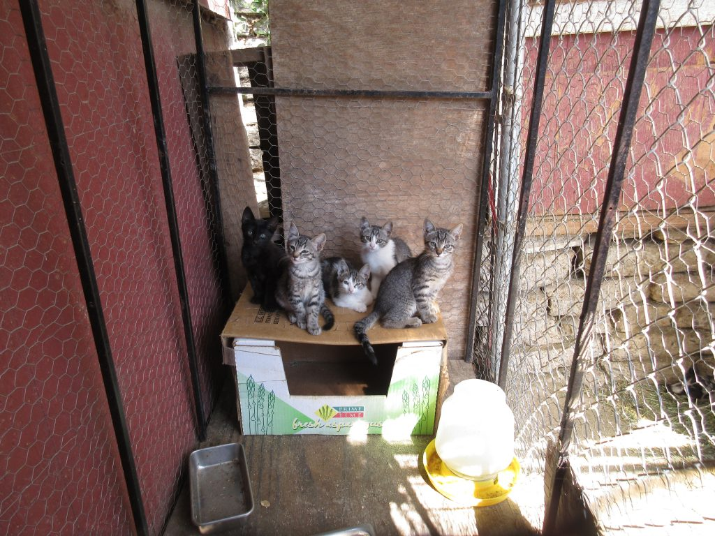 Feral kittens at the Little Farm
