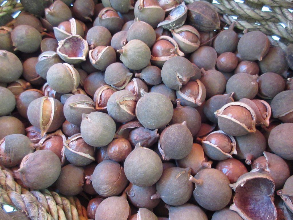 Little Farm macadamia nuts