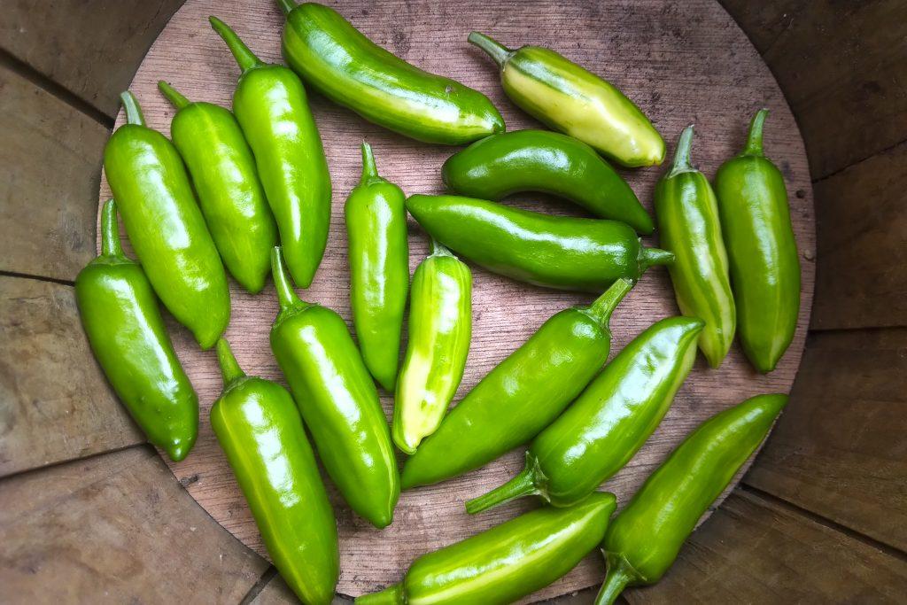 Fish Pepper Harvest