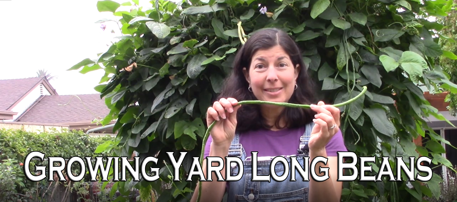 You are currently viewing YouTube: Growing Yard Long Beans or Asparagus Beans