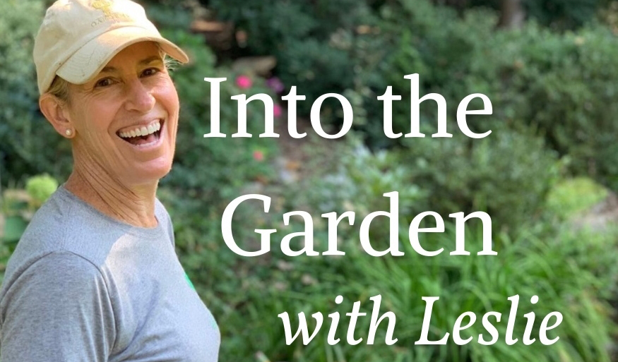 Read more about the article Podcast: Bulbs & Ornamentals with Leslie Harris