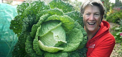 Liz Zorab cabbage